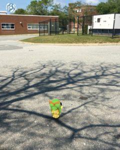 Pokemon-Cape-Cod